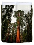 Sequoia In Kings Canyon Duvet Cover