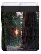 Sequoia Sunset Duvet Cover