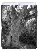 Kingsley Plantation Tree Duvet Cover