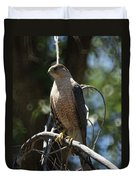 Sharp Shinned Hawk Duvet Cover