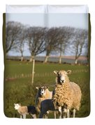 Sheep, Lake District, Cumbria, England Duvet Cover