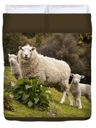 Sheep With Twin Lambs Stony Bay Duvet Cover by Colin Monteath