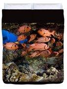 Shoulderbar Soldierfish Duvet Cover by Dave Fleetham - Printscapes