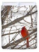 Showing His Colours - Northern Cardinal - Cardinalis Cardinalis Duvet Cover