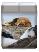 Siesta Time For Lions In Africa Duvet Cover