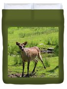 Sika Deer Water Hole Omagh Duvet Cover