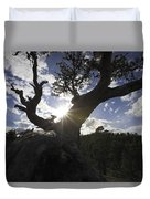 Silhouette Of A Gnarled Tree Duvet Cover