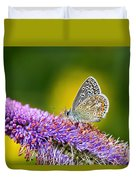 Silver-studded Blue Butterfly Duvet Cover
