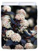 Summer Wine Ninebark Blossom Duvet Cover