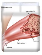 Skeletal Muscle Structure Duvet Cover