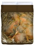 Sleeping Robins Duvet Cover