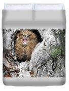 Sleepy Owlet Duvet Cover