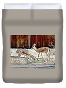 Slender-horned Gazelles In Living Desert Zoo And Gardens In Palm Desert-california Duvet Cover