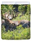 Smiling Bull Moose Duvet Cover
