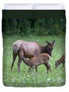 Smoky Mountain National Park Elk Cow Nursing Calf Duvet Cover