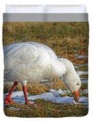 Snow Goose Feeding In A Field Duvet Cover