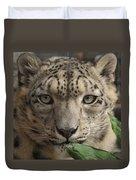 Snow Leopard 13 Duvet Cover