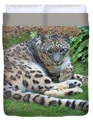 Snow Leopard, Doue-la-fontaine Zoo, Loire, France Duvet Cover