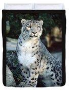 Snow Leopard Uncia Uncia Portrait Duvet Cover by Gerry Ellis