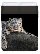 Snow Leopard Xxii Duvet Cover