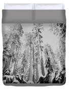 Snowy Sequoias At Calaveras Big Tree State Park Black And White 3 Duvet Cover