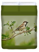 Song Sparrow Duvet Cover