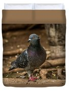 South American Pigeon  Duvet Cover
