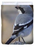 Southern Grey Shrike-- . Duvet Cover