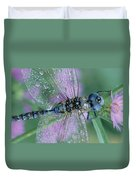Southern Hawker Dragonfly Aeshna Cyanea Duvet Cover by Tim Fitzharris