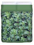 Spearmint Duvet Cover