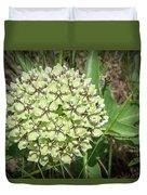 Spider Milkweed - Antelope Horns Duvet Cover