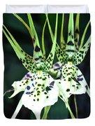 Spider Orchid Brassia Duvet Cover