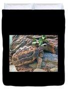 Spider Tortoise       Zoo    Indiana Duvet Cover