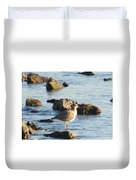 Spotted Sandpiper Keeping Sentry On The Bay Duvet Cover
