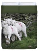 Spring Lambs 2 Duvet Cover