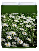 Spring Loyal Love Daisies  Duvet Cover
