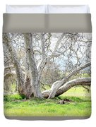 Spring Sycamore Tree Duvet Cover