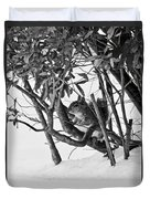 Squirrel In Low Branches Duvet Cover
