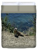 Squirrel Looking Back Over His Shoulder On The Coast Duvet Cover