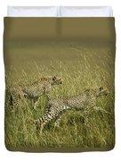 Stalking Cheetahs Duvet Cover