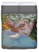 Starfish Sandwhich Duvet Cover