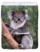 Staring Koala Duvet Cover