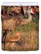 Strolling Sandhill Crane Family Duvet Cover