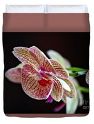 Study Of An Orchid 3 Duvet Cover