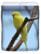 Stunning Little Yellow Budgie Parakeet In Nature Duvet Cover