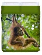 Sumatran Orangutan Pongo Abelii Baby Duvet Cover by Suzi Eszterhas