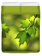 Sunlit Maple Leaves In Spring Duvet Cover