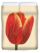 Sunlit Tulip Duvet Cover by Phyllis Howard