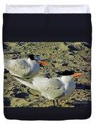 Sunning Terns Duvet Cover