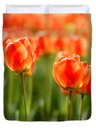 Sunsoaked Tulips #6 Duvet Cover